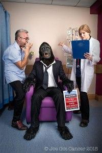 jgc gorilla - shine-blog (900 x 600px) reduced for web